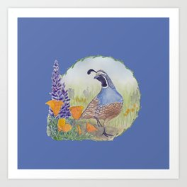 California Quail with Poppies and Lupine on Blue Art Print