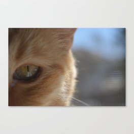 Pocko's Peepers Canvas Print