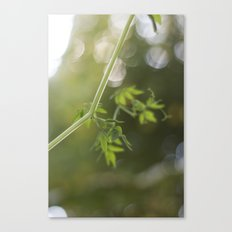 Trailing Canvas Print