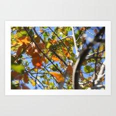 Leaves leave  Art Print