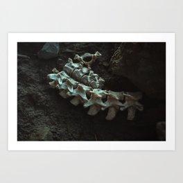 Remains of a Bygone Predator, Spine Art Print