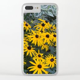 Black Eyed Susans in Bloom Clear iPhone Case