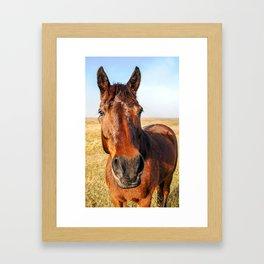 Chestnut Horse Framed Art Print