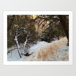Carson Forest  Art Print