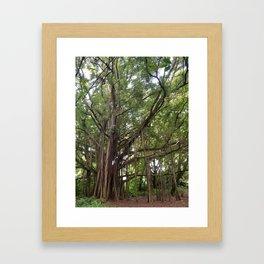 Banyan Beauty Framed Art Print