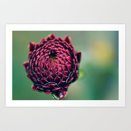 Deep Red Bud Art Print