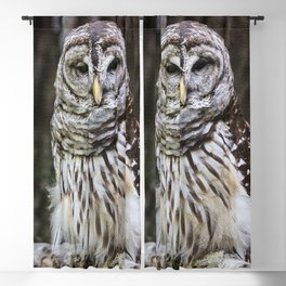 Barred Owl Blackout Curtain