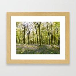 Bluebells of Micheldever Wood Framed Art Print
