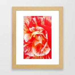 Two‑Color Rose Flower 3472 Framed Art Print