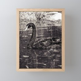 The Black Swan Framed Mini Art Print