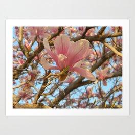 Magnolia Beauty Art Print