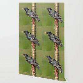 Starling on feeder Wallpaper