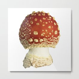Amanita Muscaria Fungi Metal Print