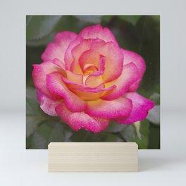 Rainbow Sorbet Rose Mini Art Print
