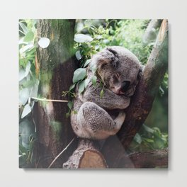 Cute Koala relaxing in a Tree Metal Print