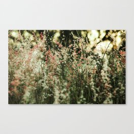 Flowers in the sun Canvas Print