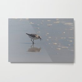 clam for lunch Metal Print