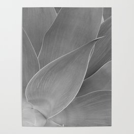 Agave Succulent Photographic Print Poster