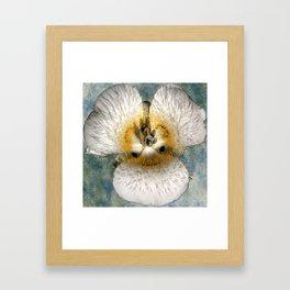 Mariposa Lily 1 Framed Art Print