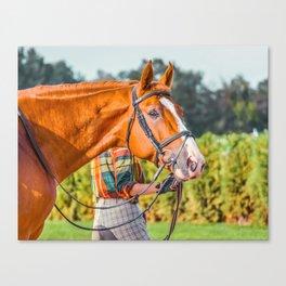 Horse head photo closeup Canvas Print