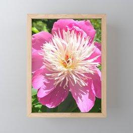 Pretty in Pink Peony Framed Mini Art Print