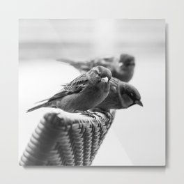 Sparrows On Chair Back Metal Print