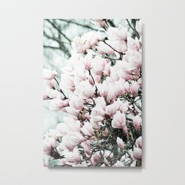 Japenese Dogwood Blooming Metal Print