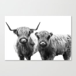 Highland Cattle - Perfect Pair Canvas Print
