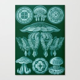 Vintage Discomedusae Print by Ernst Haeckel, 1904 Educational Chart Canvas Print