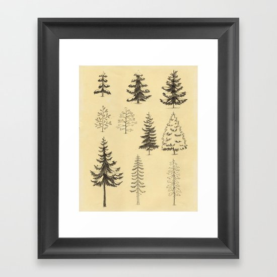 Pines and Spruces Framed Art Print