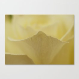 Yellow Roses (25) Canvas Print