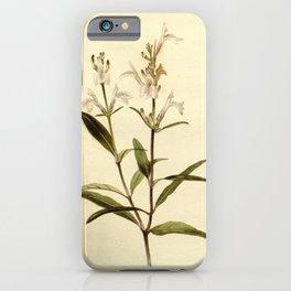 Flower justicia gandarussa21 iPhone Case
