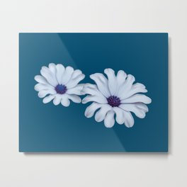 White African Daisies Metal Print