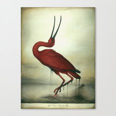 Oiled Scarlet Ibis Canvas Print