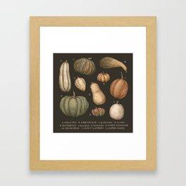 Pumpkins and Gourds Framed Art Print