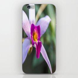 Cymbidium Orchid iPhone Skin