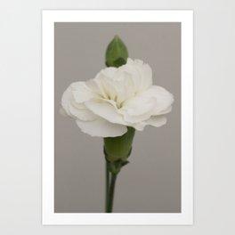 Delicate White Carnation Photograph Art Print