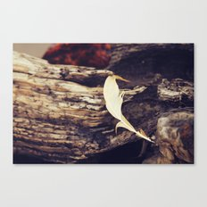 Beach Feathers Canvas Print