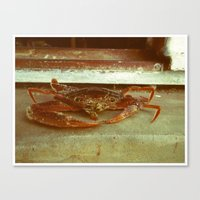 crab Canvas Prints featuring Crab by Thomas Loewen