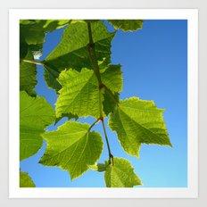 wine leafs Art Print