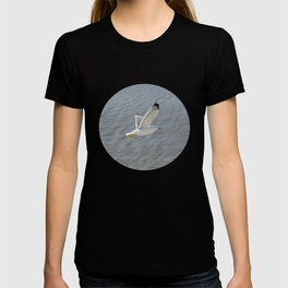 Seagull, bird,  T-shirt