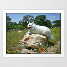 Sylvie Poses in the Texas Wildflowers Art Print