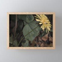 Dandelion and Fly Framed Mini Art Print