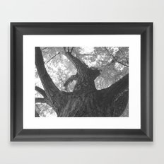 TREEWISE Framed Art Print