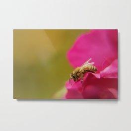 Bee on Pink Rose Metal Print