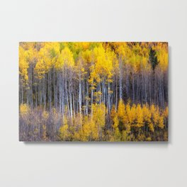 Autumn Aspens - Rows of Colorado Aspen Trees with Autumn Color in Reflection Illusion Metal Print