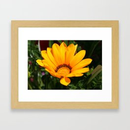 Sunbathing 1 Framed Art Print