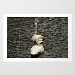 Swans Art Print