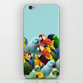 Sky blue parrots home decor iPhone Skin