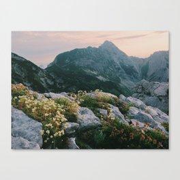 Mountain flowers at sunrise Canvas Print